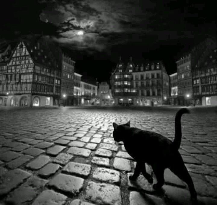 Alcune persone, a tutt'oggi, cambiano ancora strada quando vedono passare un gatto nero