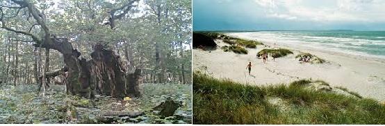 La foresta di Jaegerspris e la spiaggia di Nykobing